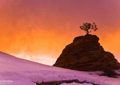 Winter Sunset, Zion Plateau